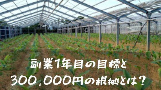 ウコン ビニールハウス栽培