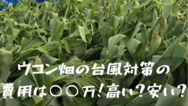 ウコンの台風対策の効果と費用は〇〇万円⁉高い?安い?