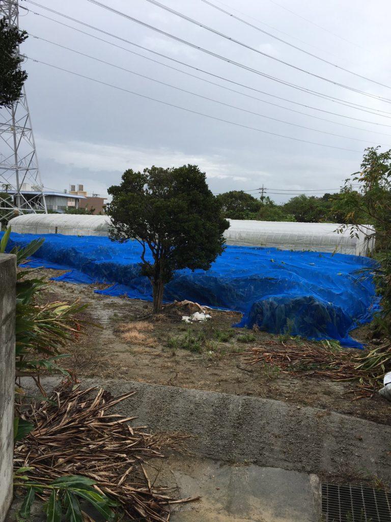 台風対策 ウコン
